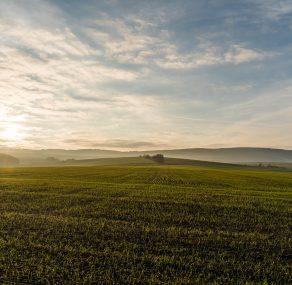 השדה המבורך
